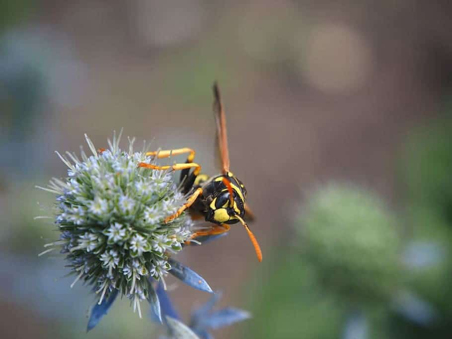 wasp-and-plant