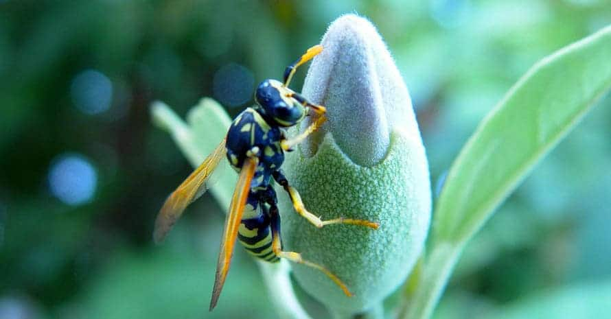 wasp-killer-with-a-flower