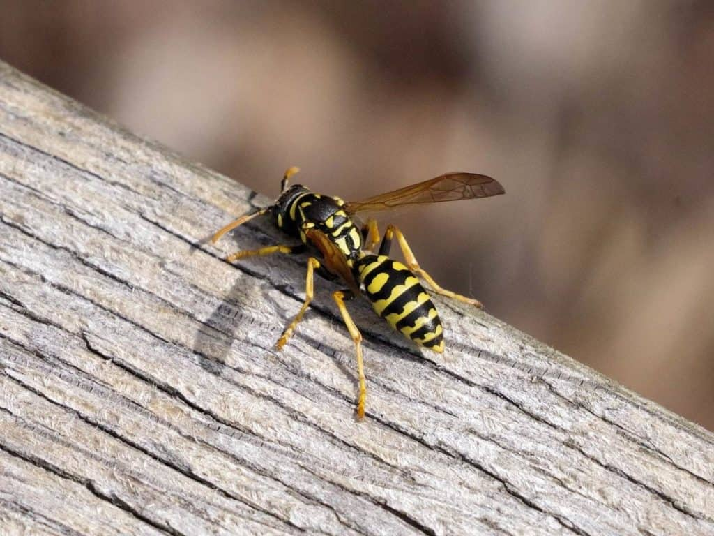 wasp-on-a-tree