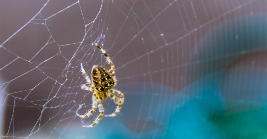 yellow spider on the web